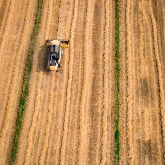 200 ha teren agricol situat in judetul Timis,Lugoj, absolut compact 100% la CF