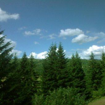 Vindem pădure situata in Maramures