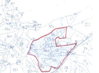 Padure 85 ha in jud. Arad
